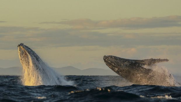 The poo, urine and decomposed bodies of whales and other sea and land mammals act as critical fertilisers for the planet.