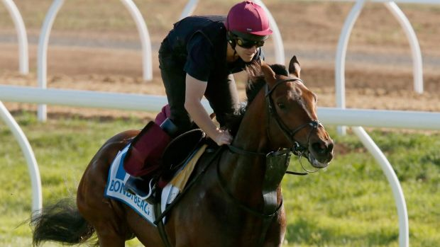 Progressive galloper: Aidan O'Brien's Bondi Beach from Ireland is in good shape for the Melbourne Cup.