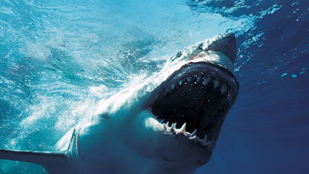 The McGowan government has announced its plans to reduce shark attacks of the WA coast.