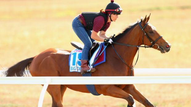 The Michael Bell trained Big Orange works in trackwork at Werribee Racecourse on Sunday morning.