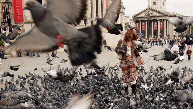 Garema Place and Tuggeranong could start looking like Trafalgar Square, if we keep encouraging the birds, the ACT ...