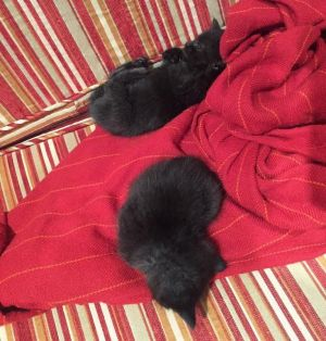 The kittens were unharmed and are being cared for.