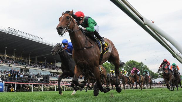 Fighting fit: Turn Me Loose shapes as a strong chance in the Emirates Stakes at Flemington on Saturday.