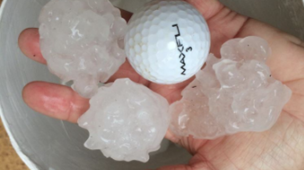 Large hail that fell on the Central Coast of NSW.