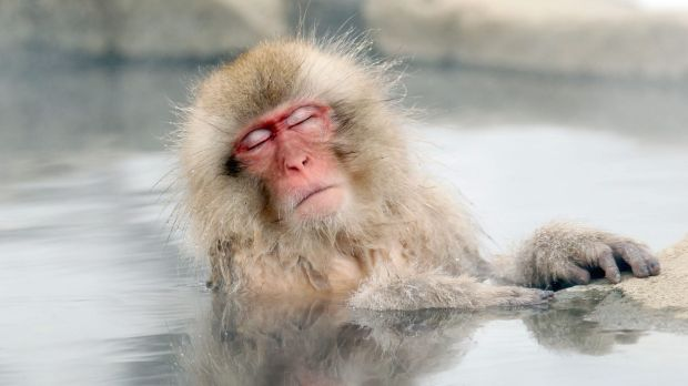 If you budget for the holiday, you'll be able to relax like this Japanese snow monkey in a hot spring.