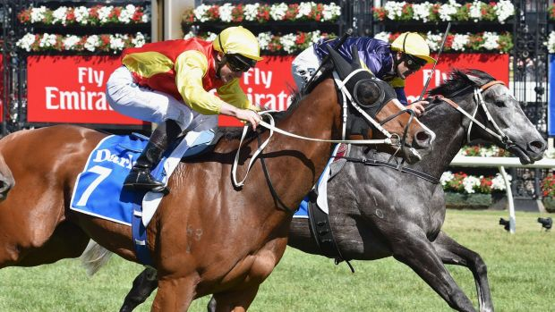 Delectation will join a quality field at the Black Caviar Lightning Stakes.