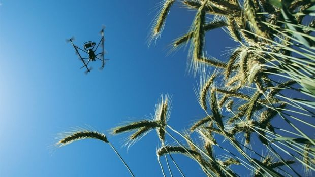 Food security on the table: A drone surveys a wheat crop in Mexico as part of an initiative to create more energy ...