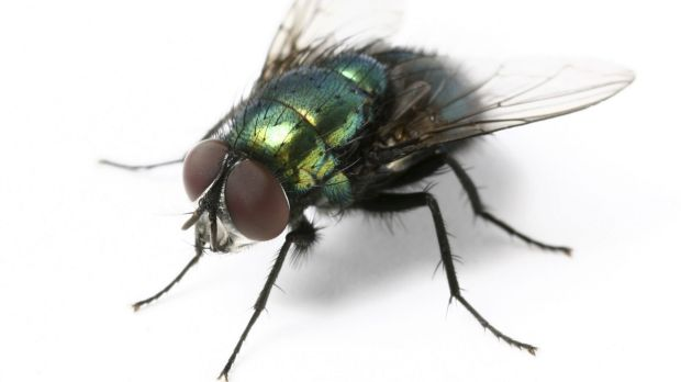 Fly numbers are on the rise thanks to a warm spring.