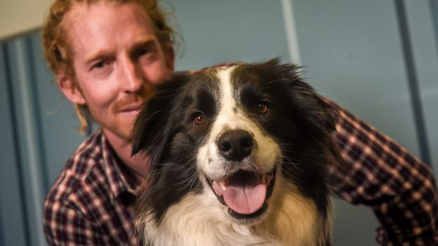 Koda is a border collie trained in animal-assisted therapy. Owner Doug Moczynski says Koda is used by Berry Street to ...