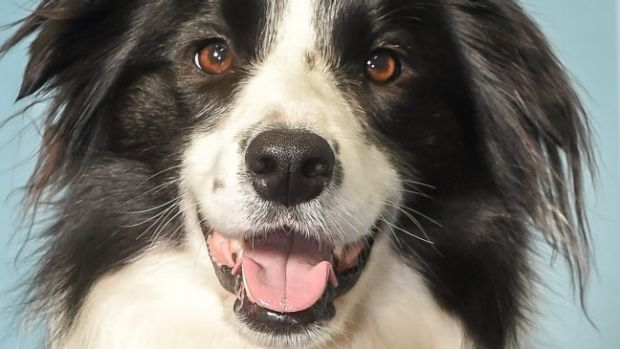 Dogs have been released from a shelter in north Queensland.