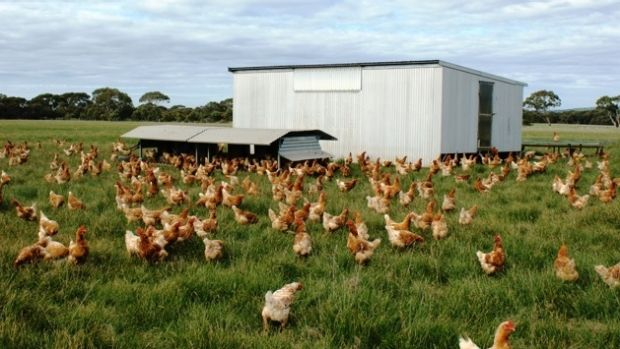 Choice is calling for a free-range egg standard that would recognise the need for hens to regularly go outside.