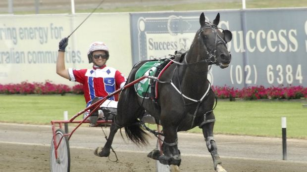 The king: Beautide is the reigning Inter Dominion champion.