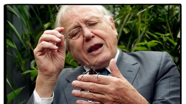 Sir David Attenborough meets a Lord Howe Island stick insect at the Melbourne Zoo.