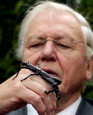 Sir David Attenborough with a Lord Howe Island stick insect during a visit to Melbourne Zoo in 2012.