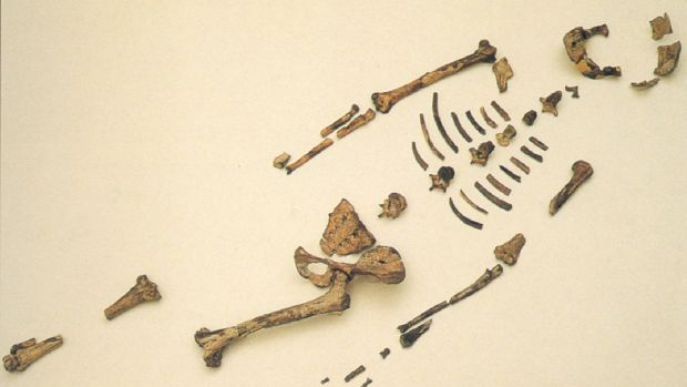 Lucy's bones are displayed in Ethopia.