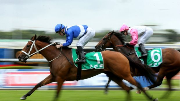 Blur: this might be all rivals see of odds-on favourite Telepathic when James McDonald gets in the saddle on Saturday.