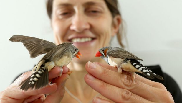 Dr Mylene Mariette with a zebra finch pair she is studying as part of her research into the bird's shared parenting habits.