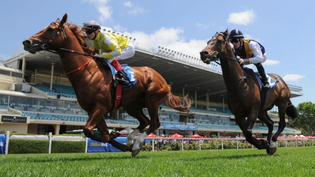 In great shape: Craig Williams urges Criterion past Orator in a track gallop at Moonee Valley in November.
