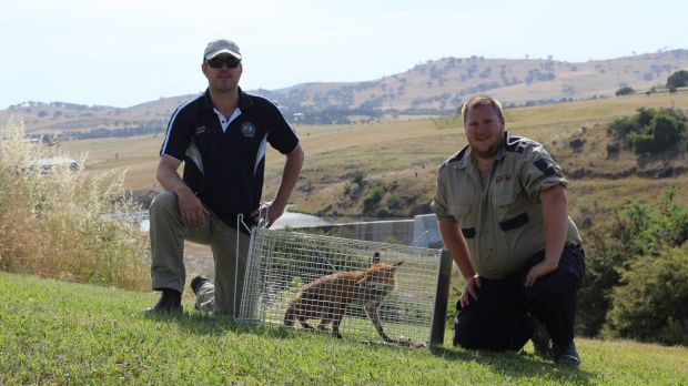 All Ferals Pest Management's Scott Corcoran with Allan Hill after capturing a fox on private property near Yass Gorge.
