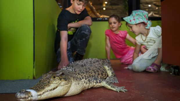 Amelia Miller, 7, with sister Emmerson, 5, and volunteer Brian la Rance with the first saltwater crocodile 'Charlie' at ...