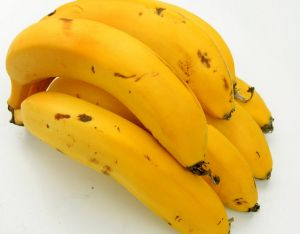 Under threat: the Cavendish banana.