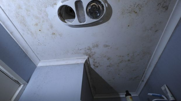 The bathroom's ceiling is covered in mould.