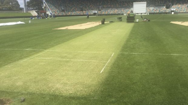 Green dreams: the Hobart pitch on Monday.