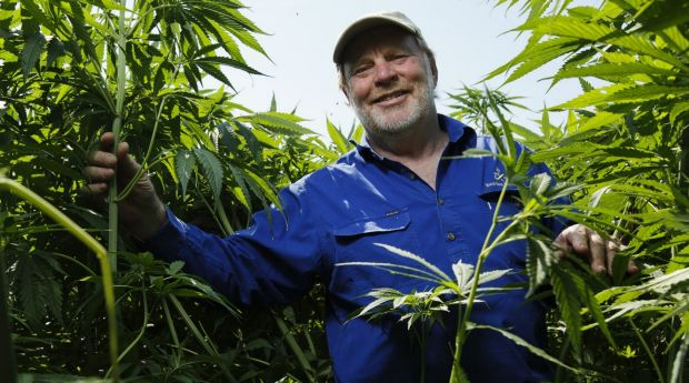 Companies like Ecofiber still have many hoops to jump through before it can supply medicinal cannabis to prescribed patients.