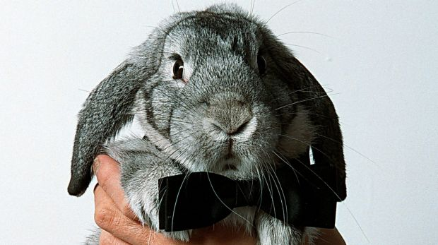 A deadly haemorrhagic virus affecting rabbits has been detected in Canberra.