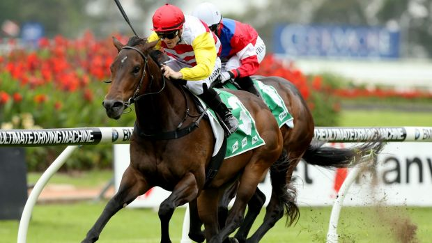 Stablemates only: Canberra trainer Mattew Dale says there is no comparison between Bitburg, seen here winning the ...