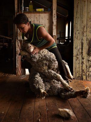 Jaiden Winters 17, a graduate of the Merriman Shearing School, crutches a sheep at a station near the Merriman Shearing ...