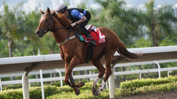 Part of the Australian contingent: Craig Williams riding Criterion during trackwork at Sha Tin ahead of Sunday's Hong ...