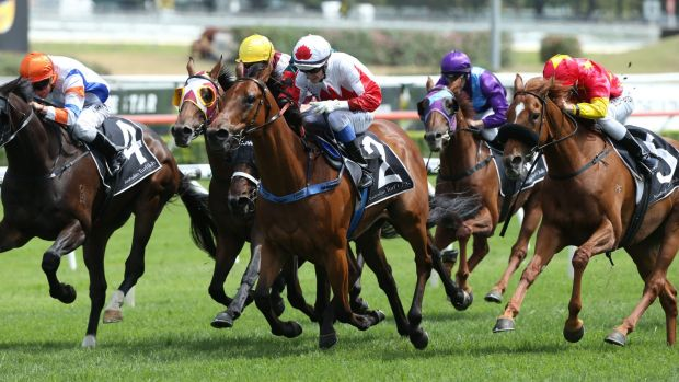 Early present: Blake Spriggs (white cap) and Sir John Hawkwood take out the Christmas Cup at Royal Randwick.