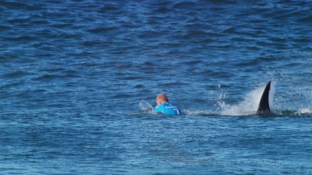 Mick Fanning's unforgettable encounter.