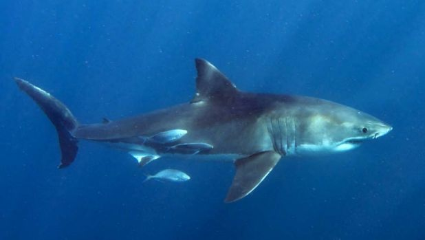 New analysis shows no link between the density of sharks and the number of attacks in an area.