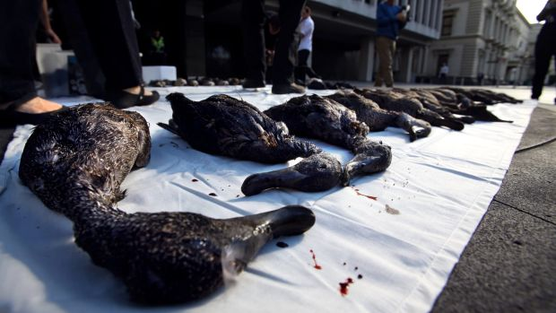 Dead freckled ducks were placed outside Treasury Place in 2014.
