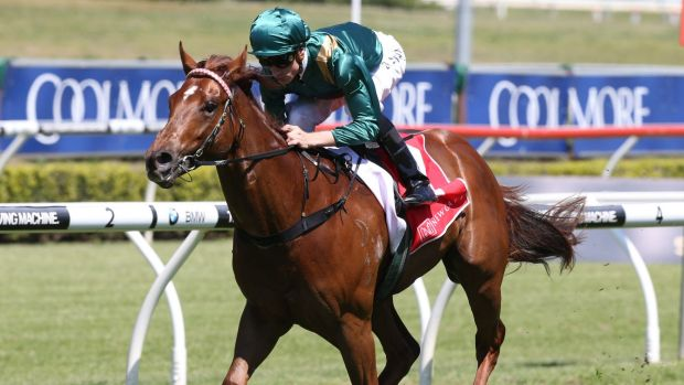 Capitalist is an odds-on Magic Millions Classic favourite.