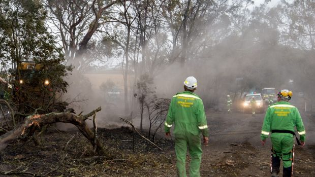 Department of Environment and Primary Industries workers fell dangerous trees on Pryors Road, Scotsburn.