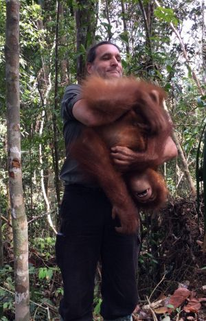 Leif Cocks acknowledges that some people think it crazy to conceive of orangutans as people, but suggests this is a ...