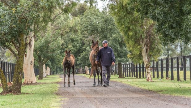 Brian Nutt with a mare and foal at Attunga Stud in Scone, Hunter Valley.