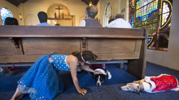 Petra Knopf pats Stryda as Sky watches on during the blessing of the animals at St James the Great Anglican Church.