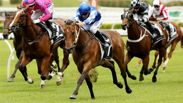 Slipper hope: Thomas Huet rides Jeanneau to a strong win at Randwick on Saturday.