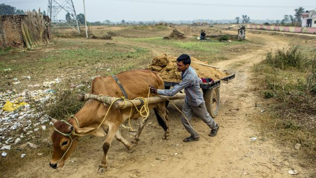 A bullock cart transports sand to a construction site at the proposed site of a reservoir, part of a project to recreate ...