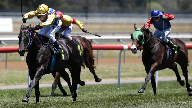 Nat King Cu, left, will carry  61kg in the Bega Cup on Sunday.