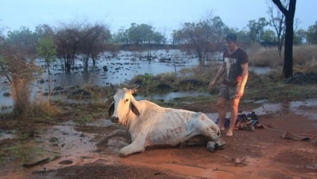 Locals managed to push Daisy out of flood waters at Mount Surprise.