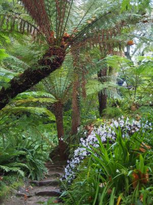 Monserrate's tree fern gully was rediscovered in the 1980s.