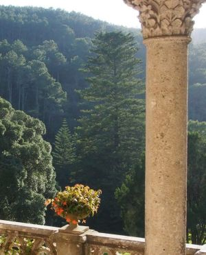 A native Australian Norfolk Island pine was the first exotic tree planted at Monserrate.