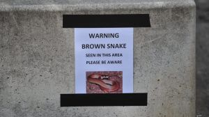 A sign near Lake Burley Griffin warning people of a brown snake that was seen in the area.