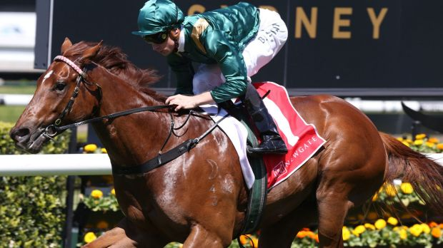 Blake Shinn rides Capitalist to win The Newgate Breeders Plate in October.