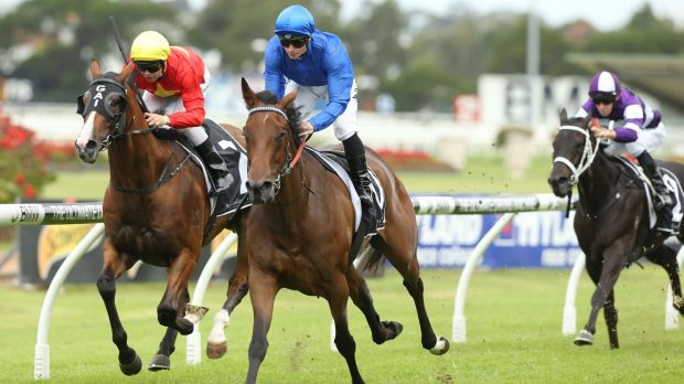 Classy: Asinara (centre) wins at Rosehill on Saturday.
